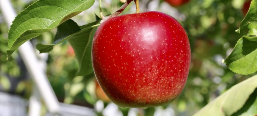 リンゴ病:子どもは心配無用、妊婦は要注意